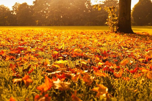 Hoe overleef ik de herfst? Tips voor activiteiten binnen en buiten.